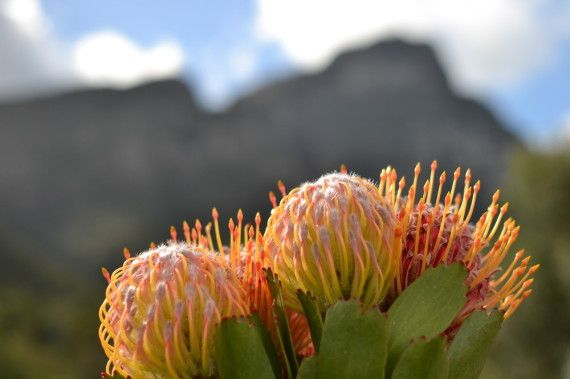 #Spring time is a go – Global Travel Alliance SA #capetown #life #southafrica #events
