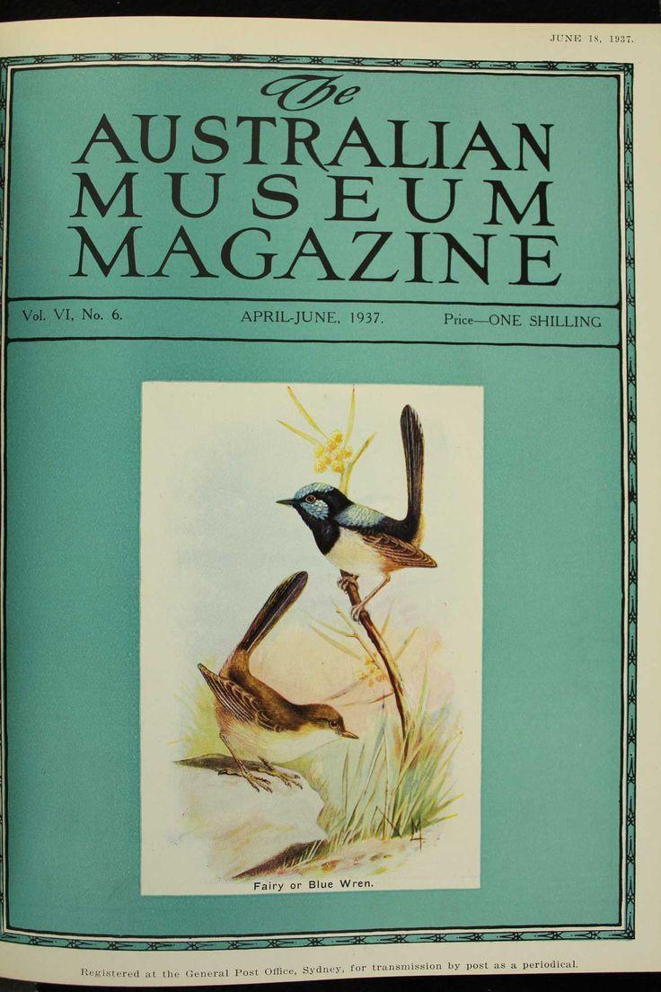 Australian-Museum-Magazine. The Fairy or Blue Wren. Illustrator: Lilian Medland. http://australianmuseum.net.au/Australian-Museum-Magazine-1921-1942/