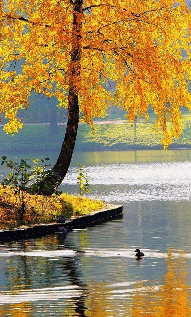 Sonbahar Resimleri - Sayfa 7 - Vazgecmem.NET