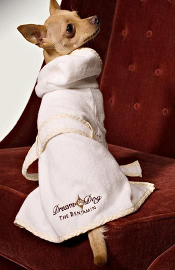 68 best dog hotels dog friendly hotels travel images on for Pet friendly hotels sydney