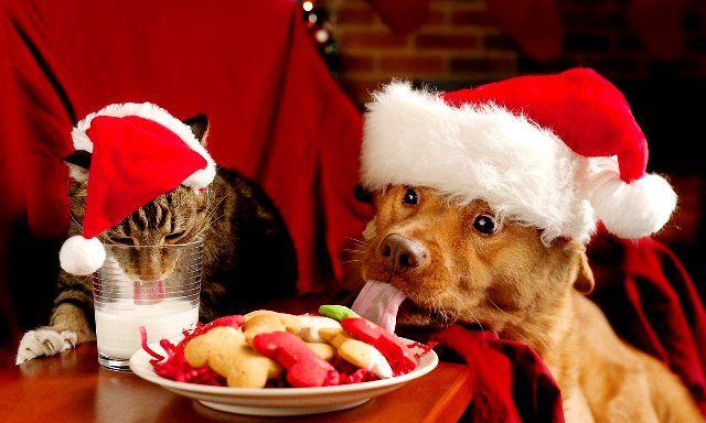 Karácsonyi menü – mit főzz az ünnepekre?   Pink Domina