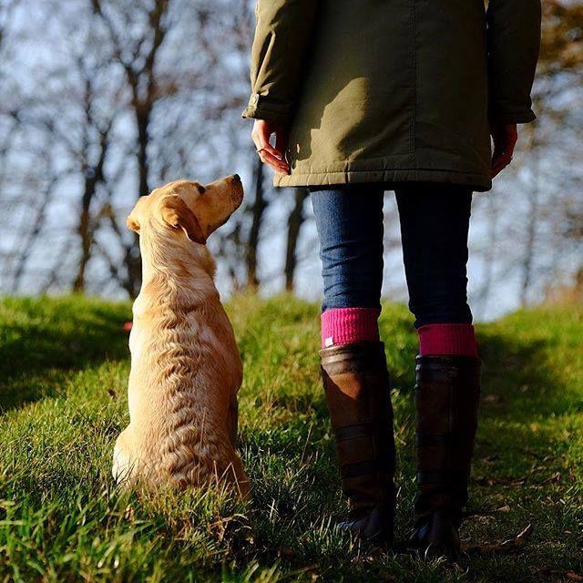 Balade hivernal avec le meilleur ami de l'homme. #dubarryofireland  #dubarryfrance #