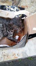 Foto: Qualcuno può aiutare questo povero gattino mezzo sbranato da un cane....si trova all'isola delle femmine