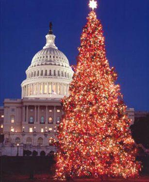 christmas trees pictures | Celebrating Christmas tree lights around the world | Christmas ...