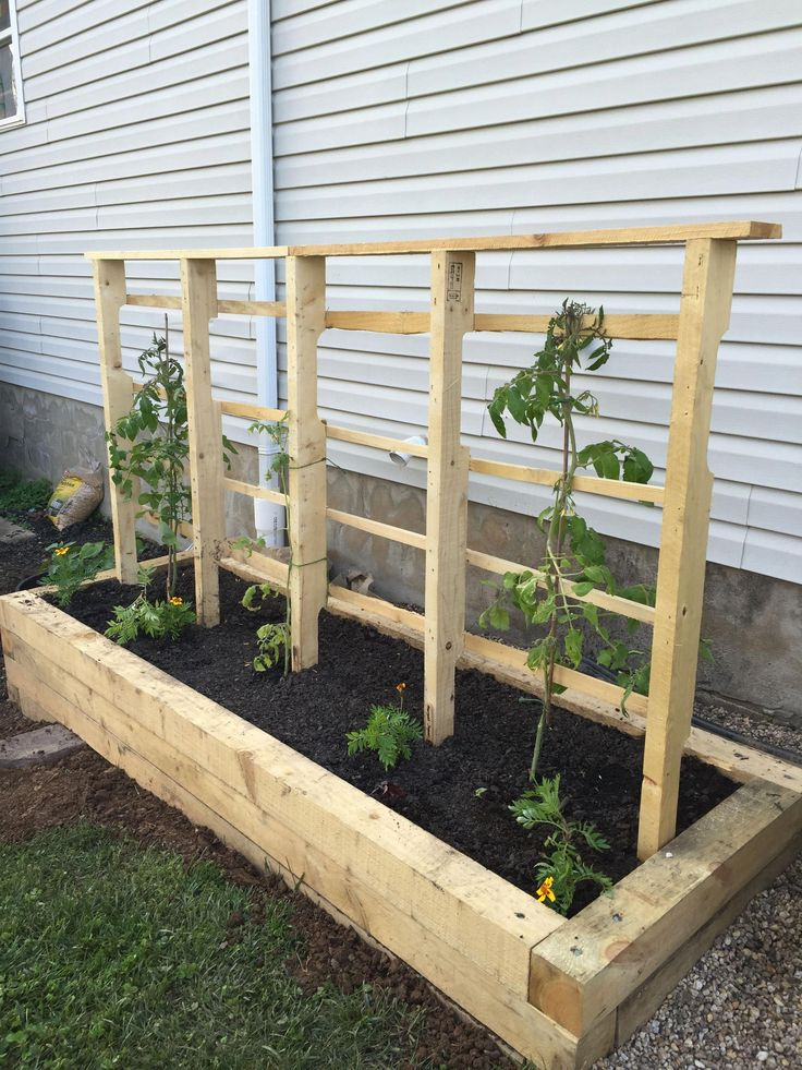 Raised bed with trellis for tomatoes