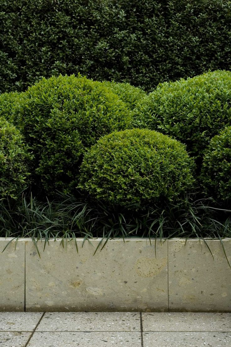 ... about Buxus on Pinterest   Gardens, Chelsea flower show and Hydrangeas