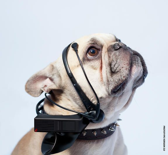 No More Woof, a sophisticated dog headset, promises to translate a dog's thoughts into English.