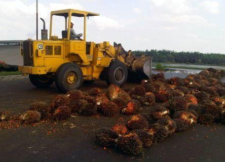 PT Bukit Asam (Persero) Tbk/PTBA melalui anak usahanya PT Bukit Multi Investama mengakuisisi 100 persen saham perusahaan perkebunan kelapa sawit PT Bumi Sawindo Permai. Di lahan perkebunan yang diakuisisi itu terdapat cadangan batu bara sebesar 580 juta ton dari total cadangan sebesar 1,99 miliar ton yang dimiliki perusahaan BUMN ini. Sekretaris perusahaan PT Bukit Asam Tbk, Joko Pramono