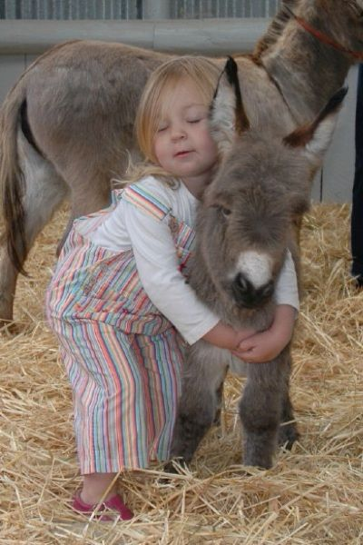 """Our grand daughter having a special moment with newborn Clovercrest Sweet Fernando"". Courtesy: Clovercrest Miniature Donkey Stud, Pukekohe (New Zealand)."