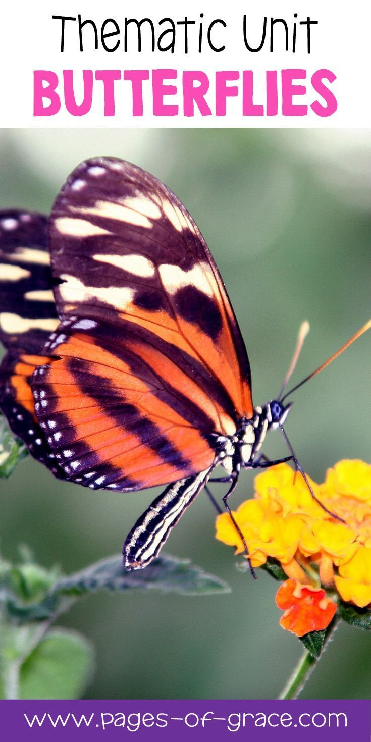 What is the name of the people who study butterflies?