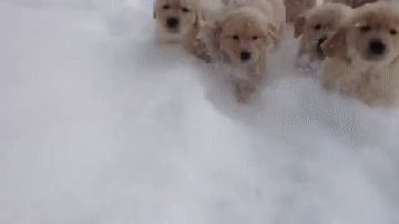 AND THIS IS HEAVEN! | Literally Just 25 Pups Playing In The Snow