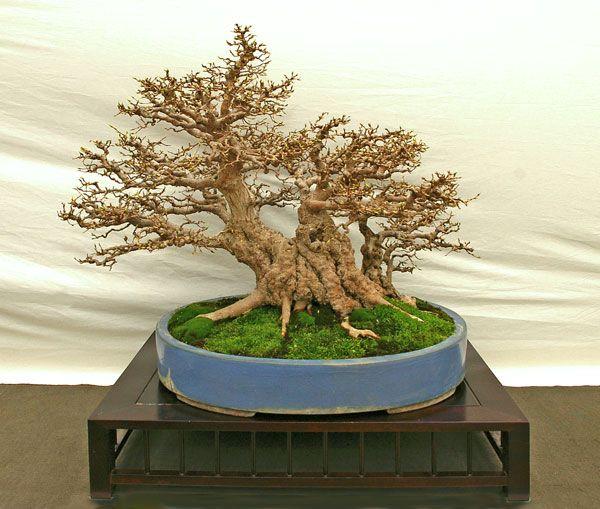 ber ideen zu hainbuche auf pinterest buchsbaum. Black Bedroom Furniture Sets. Home Design Ideas