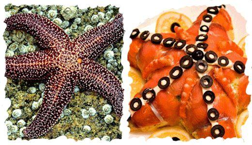 Салат в форме морской звезды