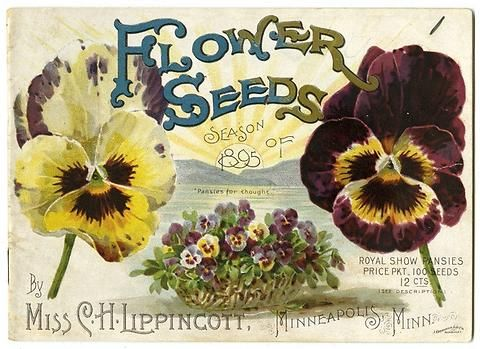 "Royal Show pansies, a sunrise, and the phrase ""pansies for thought"" illustrate the 1895 Carrie Lippincott catalog cover. Carrie Lippincott, the self-proclaimed ""pioneer seedswoman"" and ""first woman in the flower seed industry"" established her mail-order flower seed business in Minneapolis in 1891. Sending out smaller 5 inch by 7 inch catalogs with colorful covers her business was aimed at women customers."