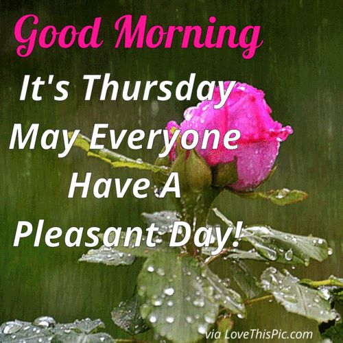 Good Morning It's Thursday May Everyone Have A Pleasant Day good morning thursday thursday quotes good morning quotes happy thursday thursday quote good morning thursday happy thursday quote beautiful thursday quotes thursday quotes for friends and family thursday gifs