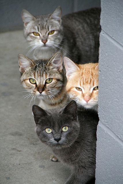 """Wild Quartet"" -- [Abandoned strays cats at *Basso Bridge - Lake Road, La Grange, California*]~[Photograph by organicpixel (Megan Conlin) - December 30 2007]'h4d.3'"