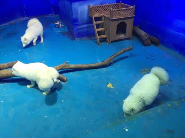 Seriously? This is all they have in their enclosure. The polar bear has even less than that! Po 11/24/16