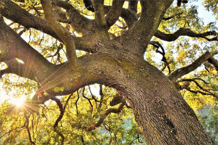 M  o   m   e   n   t   s   b   o   o   k   .   c   o   m: «Τα δέντρα είναι ποιήματα που γράφει η γη προς τον...