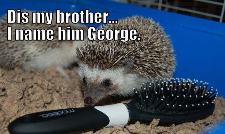 Hedgehog Meme #Brother, #Name
