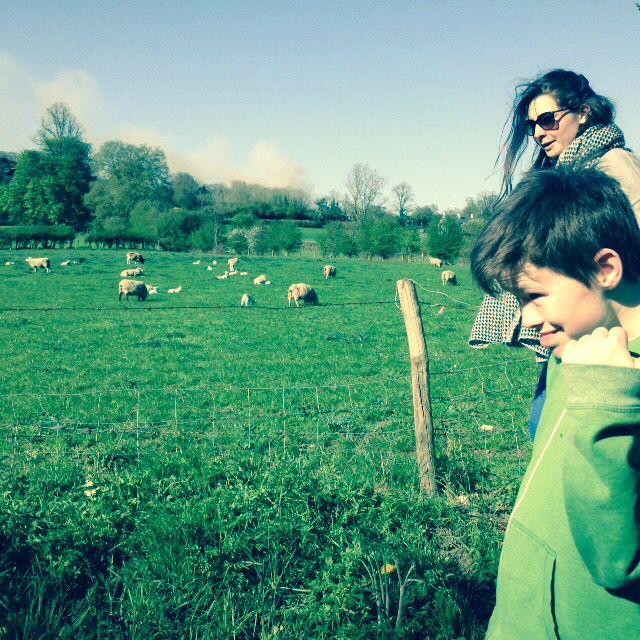Lambs in Seale