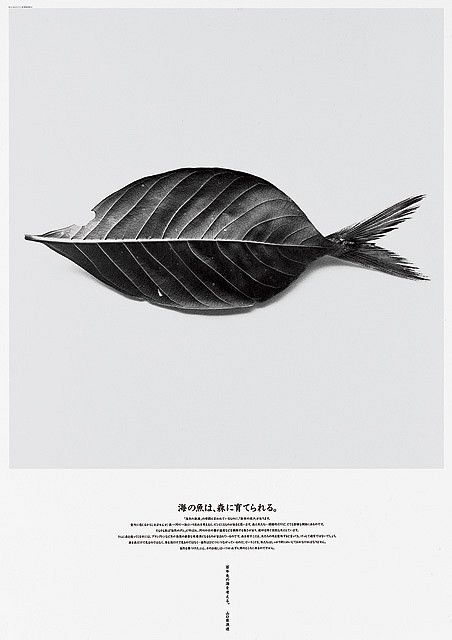 Leaffish magazine cover | editorial design