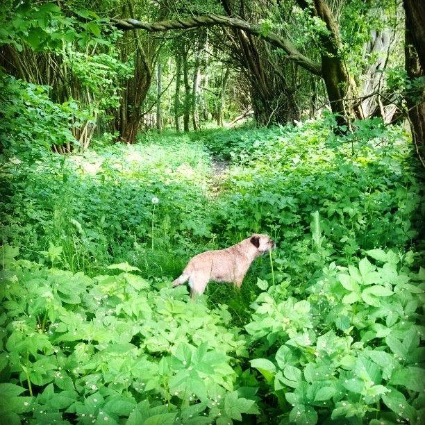 Fra den vilde, skønne have i Faksemosen...