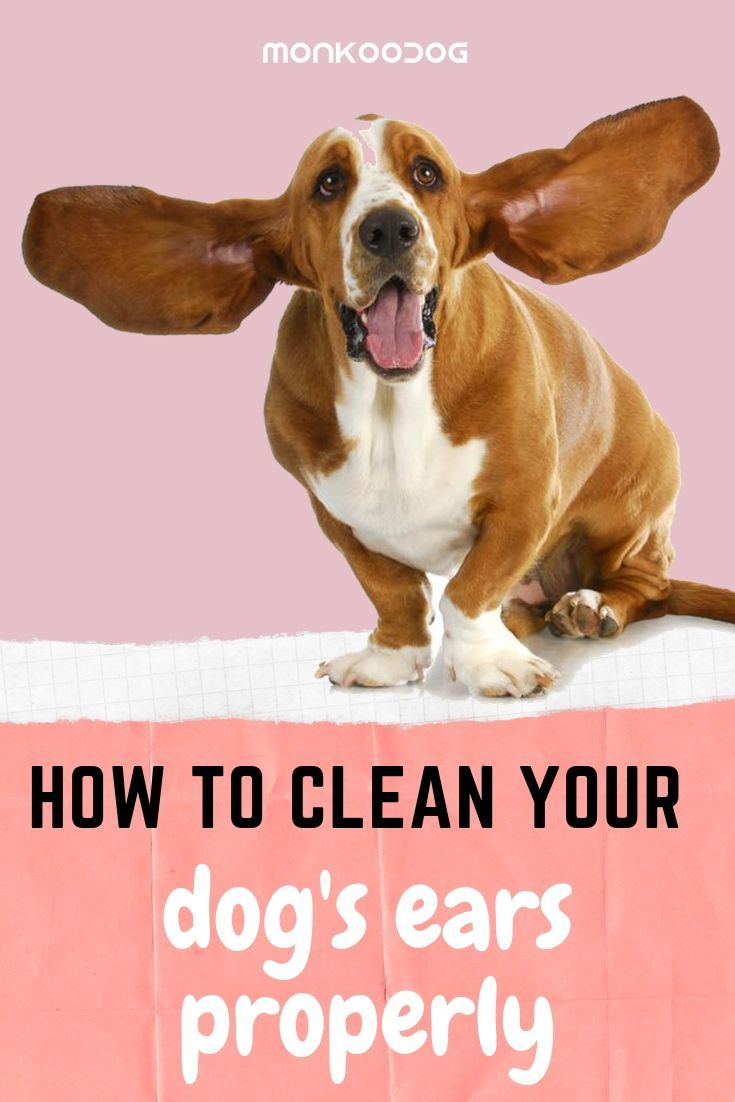 How to clean your dogs ears properly your dog smart