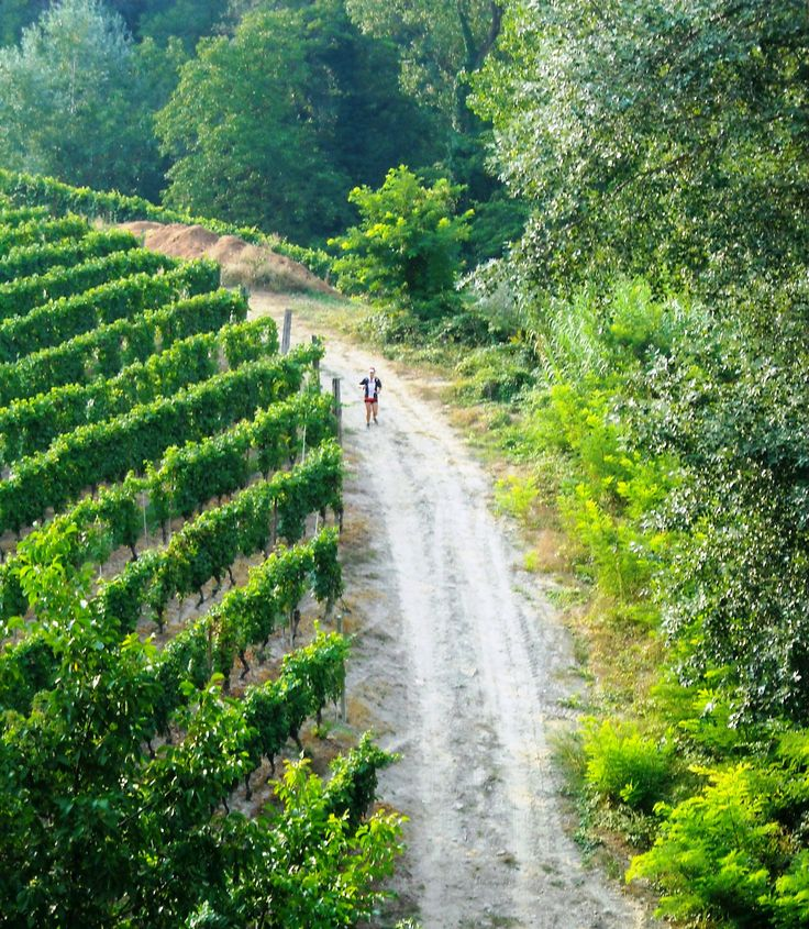 Hiker in the vineyards from the trails taken during the Trail del Moscato races   Sentieri e strade del Trail del Moscato #Piemonte #Piedmont #Italy