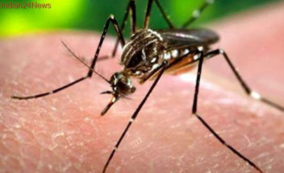 Deforestation causing increase in malaria cases: study
