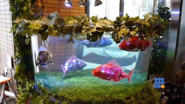 WebBuzz du 03/07/2017: Japon des poissons robots dans un hotel à Tokyo-Robotic fish Hotel Maihama Tokyo Bay  Pour éviter un entretien trop difficile, cet hotel à Tokyo utilise des poissons robots !!!  https://www.noemiconcept.com/index.php/en/departement-informatique/webbuzz-tech-info/207853-webbuzz-du-03-07-2017-japon-des-poissons-robots-dans-un-hotel-%C3%A0-tokyo-robotic-fish-hotel-maihama-tokyo-bay.html#video