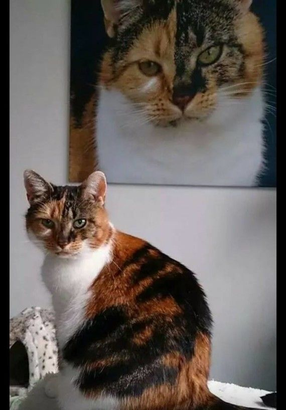 Your Cats – 21st September 2014