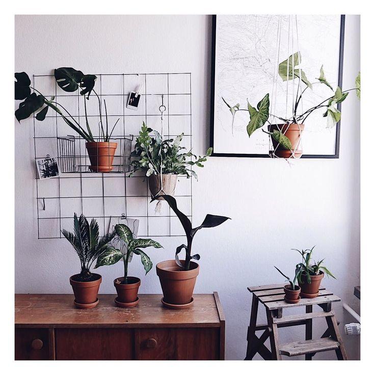 Uwielbiam takie zwykle proste ceramiczne doniczki  _____________ #deplantencaravan #loveyourplants #plantcare #greendesign #indoorplant #indoorplants #plantporn #houseplants #plantlovers #planten #interiorRewilding #plantshelfie #plants #rośliny #wystrojwnetrz