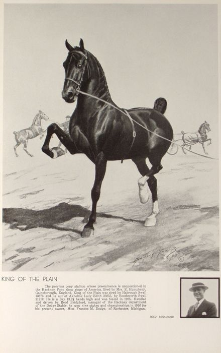 KING OF THE PLAIN and REED BRIDGFORD | The American Saddlebred Museum