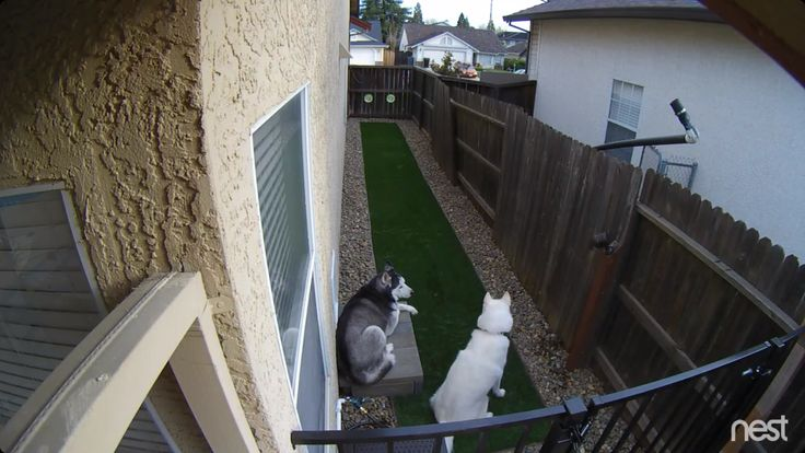 Repurposed side yard as dog run