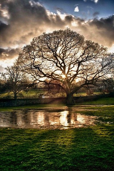 What a marvelous sunset photo! I love the sun peeking through the tree and the reflections in the water.