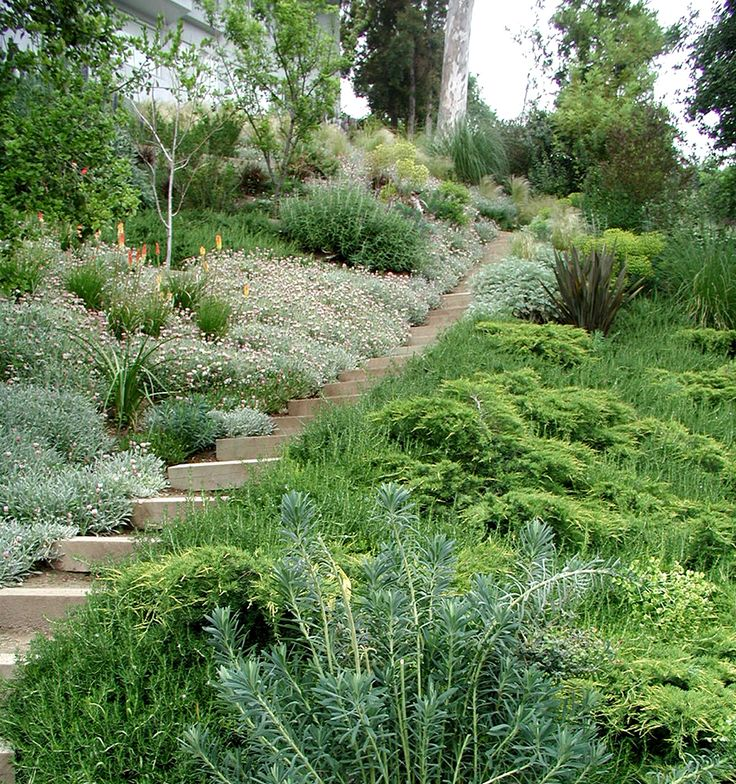 22 best images about slope solutions on pinterest for Hillside landscaping plants