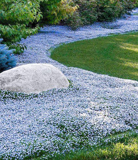 11 best Garten images on Pinterest Backyard ideas, Crates and Emerson - gartenpflanzen winterhart immergrun