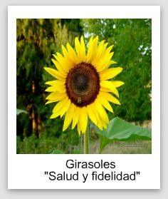 MadykMusicLife: Significado de la flores