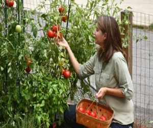 Indoor Vegetable Garden Ideas garden landscaping cozy apartment indoor kitchen gardening at Indoor Vegetable Garden