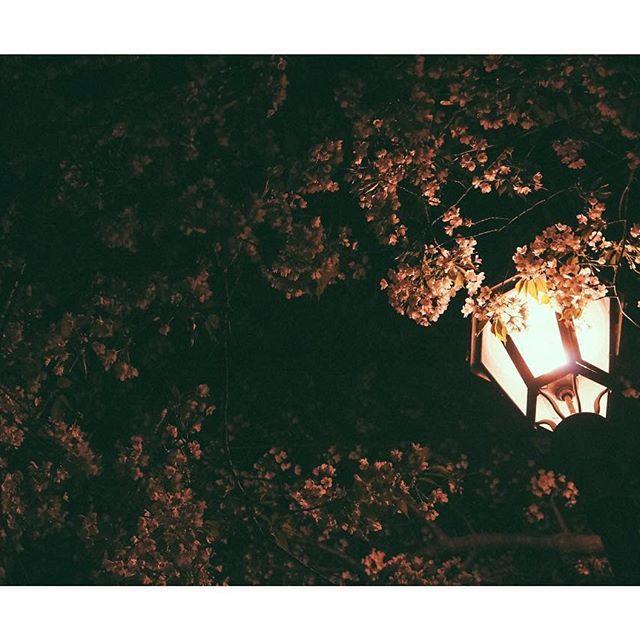 【horo_sunny】さんのInstagramをピンしています。 《桜と電灯 . . .  #instagramjapan #IGersJP #ig_japan #team_jp_ #photo_shorttrip #photo_jpn #Lovers_Nippon #icu_japan  #s_shot #loves_nippon #igs_world #東京カメラ部 #japan_of_insta #PHOS_JAPAN #bestjapanpics  #team_jp_skyart #japan_night_view_member #nightphotography  #night_excl #night_shots #nightscaper #写真好きな人と繋がりたい #ファインダー越しの私の世界 #写真撮ってる人と繋がりたい #桜 #nex5n》