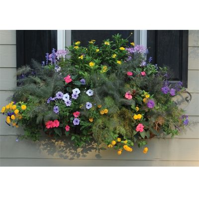 "Pamela Crawford - 30"" Window Box Planter with attached liner."
