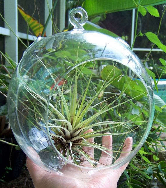 104 Best Images About Terraria On Pinterest: Best 25+ Hanging Glass Terrarium Ideas On Pinterest