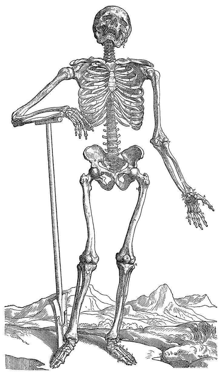 SkeletonwithShovel.jpg (1245×2097)