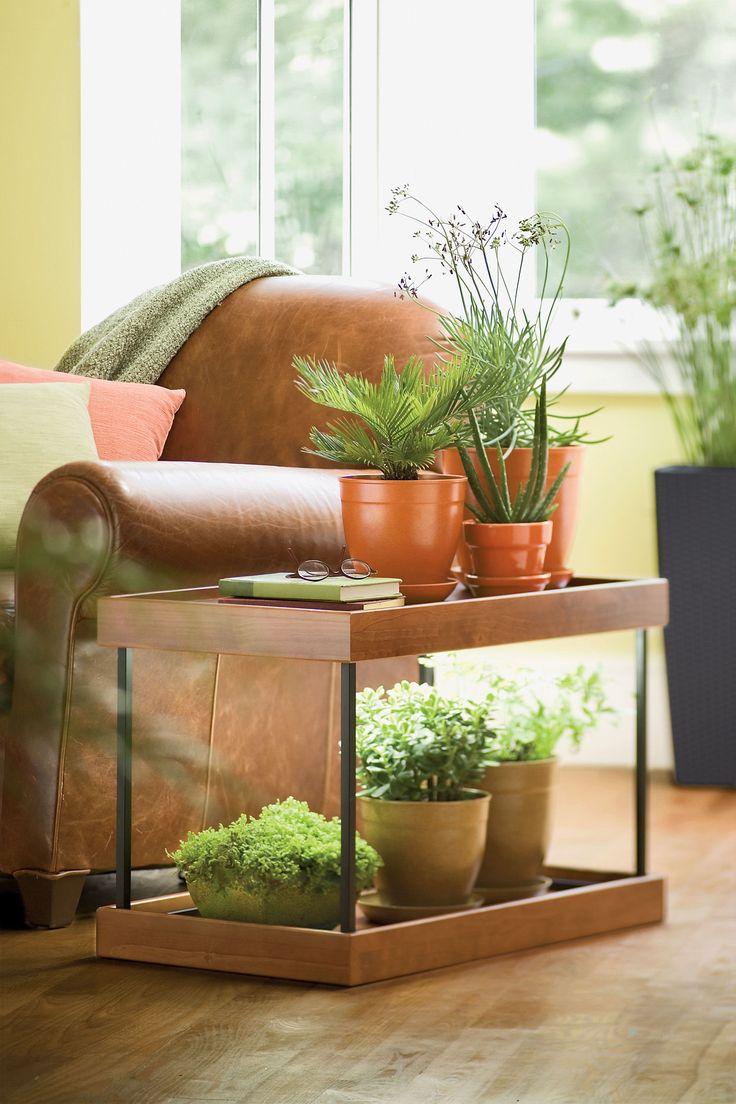 33 best indoor g art en plants images on pinterest plants