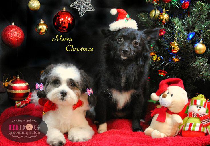 Merry Christmas Mocha & Chino!