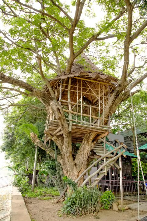 78 images about tree houses on pinterest trees for Houses built in trees