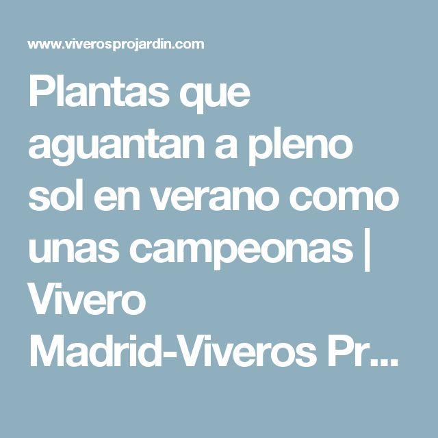 Plantas que aguantan a pleno sol en verano como unas campeonas | Vivero Madrid-Viveros Projardín
