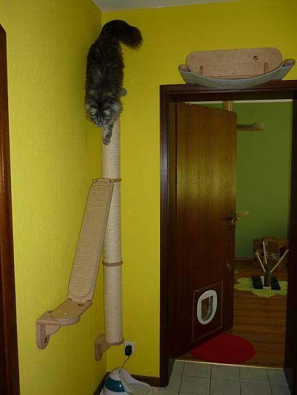 die besten 25 katzen wandregale ideen auf pinterest katzenregale regale f r katzen zum. Black Bedroom Furniture Sets. Home Design Ideas