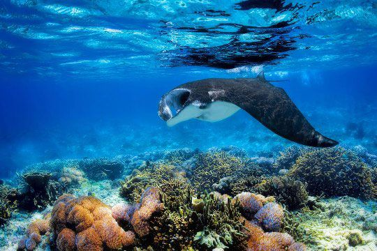 Diving in Komodo Island, Indonesia: Cannibal Rock, Gili Lawa, GPS Point, Rinca and More