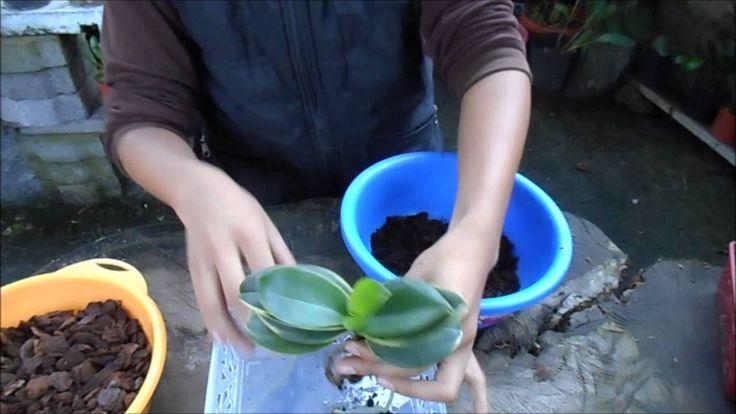 La mejor maceta para orquídeas epífitas o aereas || Orquiplanet - YouTube
